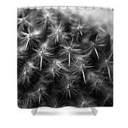 Mammillaria Shower Curtain