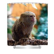 Mamouset Shower Curtain