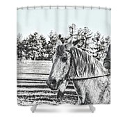 Man And His Horse Shower Curtain