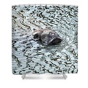 Manatee 2 Shower Curtain