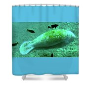 Manatee And Friends Viewed From Glass Bottom Boat At Silver Springs Shower Curtain