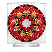 Mandala - Talisman 4010 Shower Curtain