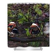 Mandarin Ducks Shower Curtain