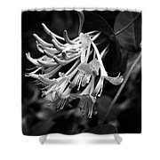Mandarin Honeysuckle Vine 1 Black And White Shower Curtain