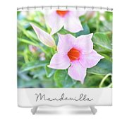 Mandevilla Pink Beauty Shower Curtain