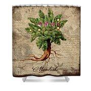 Mandrake Vintage Elements Botanicals Collection Shower Curtain