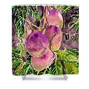 Mango Tree Fruit Shower Curtain