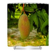 Mango Work Number One Shower Curtain