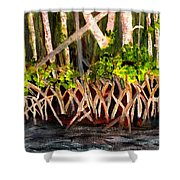 Mangrove At Gumbo Limbo Shower Curtain