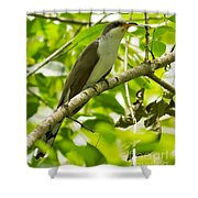 Mangrove Cuckoo Shower Curtain