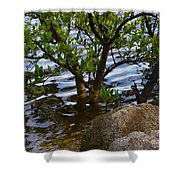 Mangroves And Coquina Shower Curtain