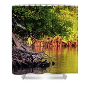 Mangroves Of Roatan Shower Curtain