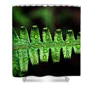 Manoa Fern Shower Curtain