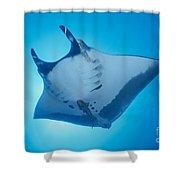 Manta Ray Shower Curtain