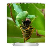 Mantis Munchies Shower Curtain
