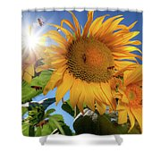 Many Bees Flying Around Sunflowers Shower Curtain
