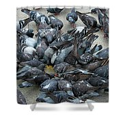 Many Doves At Piazza San Marco Venice Shower Curtain