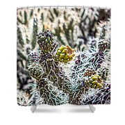 Many Stems Of Poky Small Cactus In Desert Shower Curtain