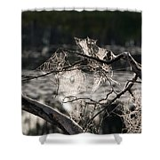 Many Webs Shower Curtain