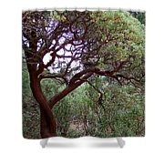 Manzanita Tree By The Road Shower Curtain