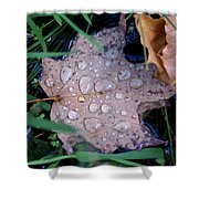 Maple Dew Shower Curtain