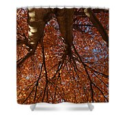 Maple Dreaming Shower Curtain
