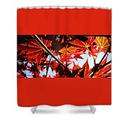 Maple Fire Shower Curtain