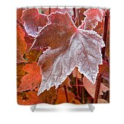 Maple Frost  Shower Curtain