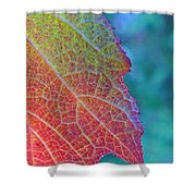 Maple Leaf In Autumn Shower Curtain