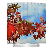 Maple Leaves Against The Sky  Shower Curtain