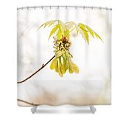 Maple Leaves And Fruits Shower Curtain