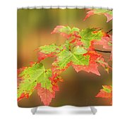 Maple Leaves Changing Shower Curtain