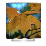 Maple Leaves In Autumn Shower Curtain