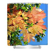 Maple Mania 1 Shower Curtain
