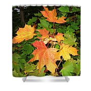 Maple Mania 10 Shower Curtain