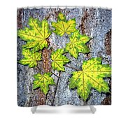 Maple Mania 12 Shower Curtain