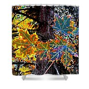 Maple Mania 14 Shower Curtain