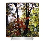Maple Mania 16 Shower Curtain