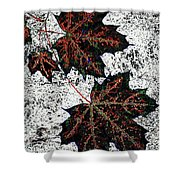 Maple Mania 17 Shower Curtain
