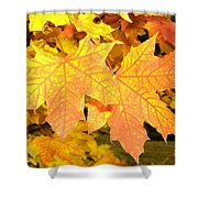 Maple Mania 2 Shower Curtain