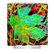 Maple Mania 21 Shower Curtain