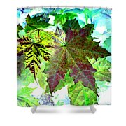 Maple Mania 24 Shower Curtain
