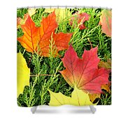 Maple Mania 5 Shower Curtain