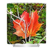 Maple Mania 6 Shower Curtain
