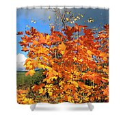 Maple Mania 8 Shower Curtain