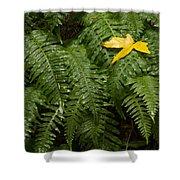 Maple On Fern Shower Curtain