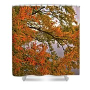 Maple Over The River Shower Curtain