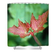 Maple Red And Green Shower Curtain
