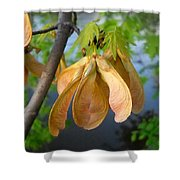 Maple Seeds In May Shower Curtain