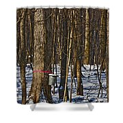 Maple Sirup Hdr No1 Shower Curtain